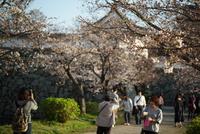 桜前線真っ盛り〜♬