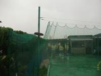 今日は雨だね