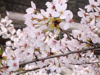 春です【社員研修】
