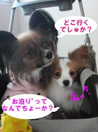 家族旅行へ…♪(出発編)