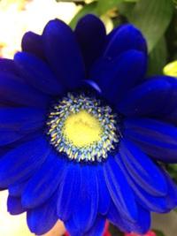 週末のおすすめ花