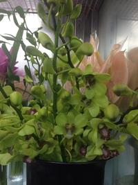 グリーンな花々