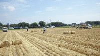 麦ワラ引き