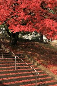 赤いもみじの階段