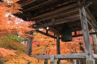 長野市昌禅寺の紅葉ふたたび。。。