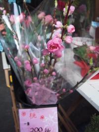おひな祭りの花と言えば・・・