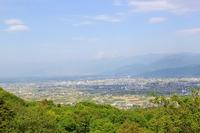 オオデマリの花@茶臼山自然植物園
