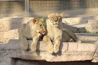 「世界一危険な動物園」