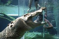 ワニがいる水槽に沈められる恐怖のアトラクション