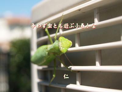 フォト575『 争わず虫とも遊ぶ小春かな 』ts2304