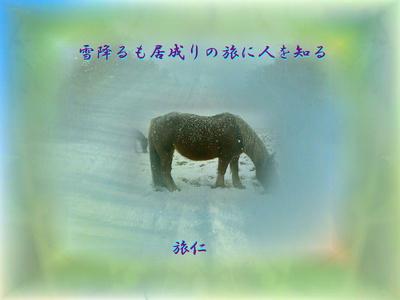 フォト575『 雪降るも居成りの旅に人を知る 』tq0408