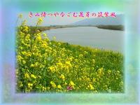 『 きみ待つやなごむ花芽の筑紫風 』筑紫風交心rz1603