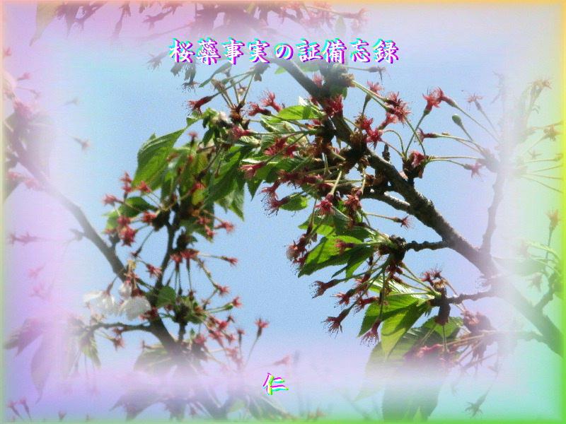 フォト平和の砦575『 桜蘂事実の証備忘録 』zrw1302
