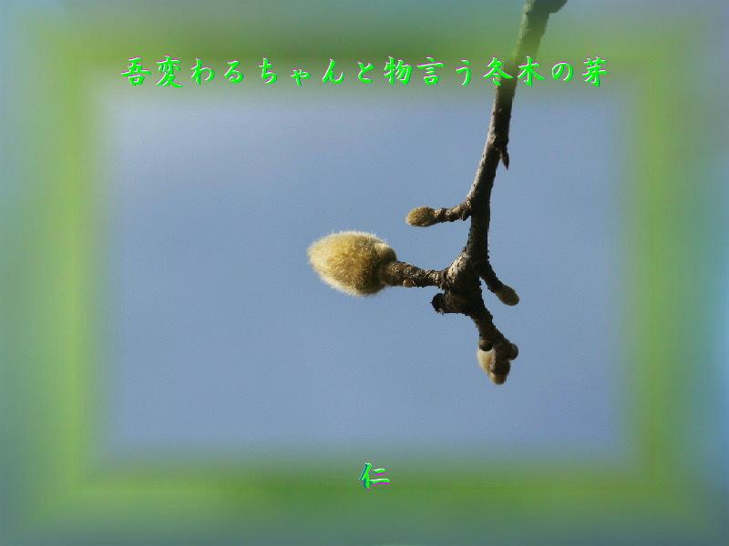 『 吾変わるちゃんと物言う冬木の芽 』平和の砦575交心zry0206