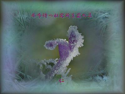 フォト575『 余命待つ収容所裏霜の草 』rz2103