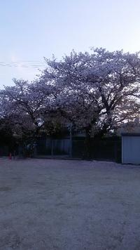 '16 今年もう最後の桜
