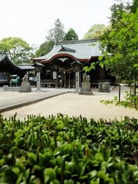 久しぶりに筑紫神社にお参り。