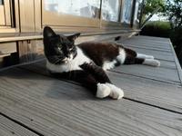 須賀神社の猫ちゃん。