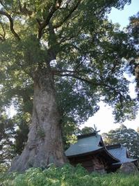 大きな楠がある阿蘇神社。