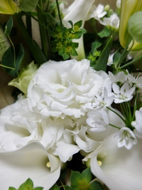 ホワイトデーだから白いお花♪