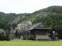 山里の春。