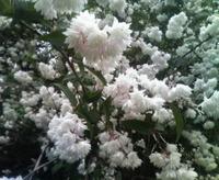 四季の花たち