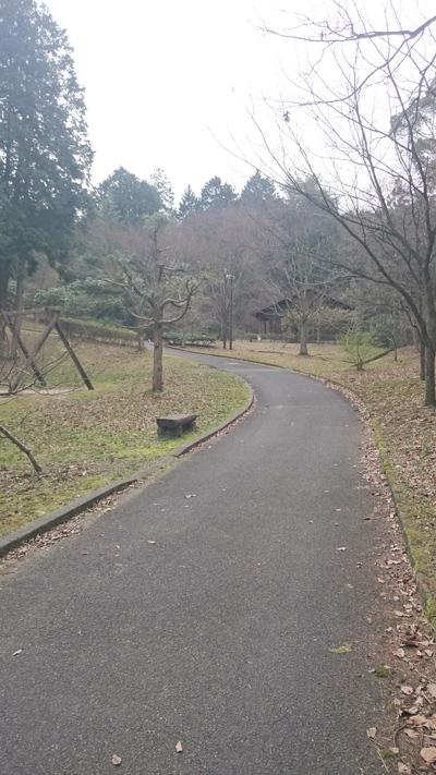 坂道 いこいの森