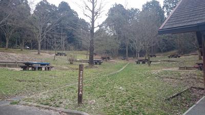 いこいの森キャンプ場 フリーサイト