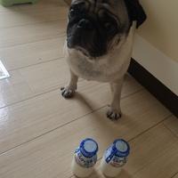 宅配牛乳と カルピスと牛乳で作るもみもみシャーベット