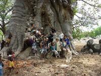世界一大きなバオバブの木