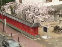 桜満開の今日の取引