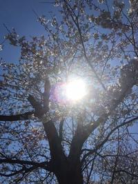 2017最新、春の着物リメイクコート 2017/04/04 13:27:08