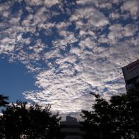 秋雲広がる