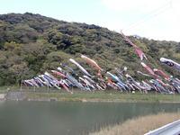 北九州 紫川のこいのぼり