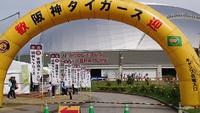 沖縄キャンプレポート2019:阪神タイガース編