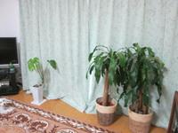 【リビング風水】リビングに観葉植物を飾る