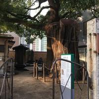 博多町歩き( 謝国明の墓 )