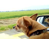 糸島で ランチしてきました