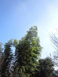 アトリエ&ファバラカフェ宿根草.霜月のスケジュールです♪