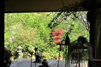 吉川よしひろCell ♪新緑 Home Concert ♪ 明日4月15日 (日)