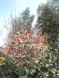 桜も寒いようですね~。