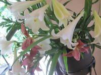 百合の薫り & 下野の花