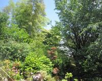 杏の収穫 & 栗の花の絨毯♪