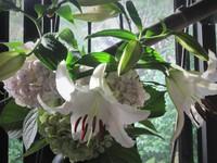 ガラスと白磁と漆 &花
