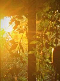 葉月後半~長月 アトリエ&ファバラカフェ宿根草.ご案内です♪