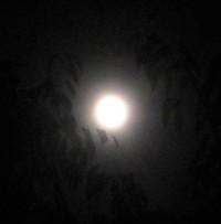 今宵は、初秋の満月〇