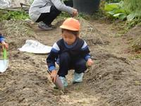 畑に玉ねぎを植えました!