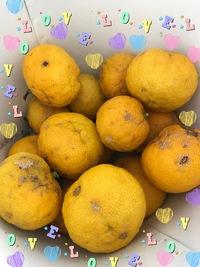 柚子を収穫❣️(。^~^。)