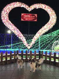 福岡➡︎広島に車中泊の旅❣️(。・o・。)ノ