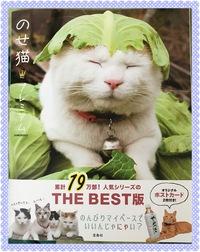 のせ猫写真集❣️ʅ(。◔︎‸◔︎。)ʃ❣️